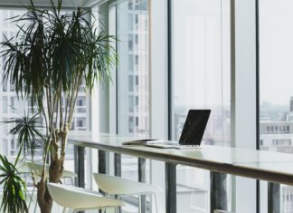 The benefits of office plants